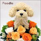 トイプードル犬のプリザーブドフラワーアレンジ トイプードルグッズ