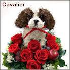 キャバリア犬のトピアリー