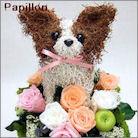 パピヨン犬のトピアリー