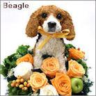 ビーグル犬のプリザーブドフラワーアレンジ ビーグル犬グッズ