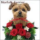 ノーフォークテリア犬のトピアリー