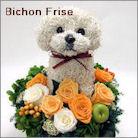 ビションフリーゼ犬のプリザーブドフラワーアレンジ ビショングッズ