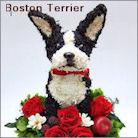 ボストンテリア犬のプリザーブドフラワーアレンジ ボストンテリアグッズ
