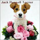 ジャックラッセルテリア犬のプリザーブドフラワーアレンジ ジャックラッセルグッズ
