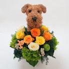 エアデールテリア犬のプリザーブドフラワーアレンジ エアデールグッズ