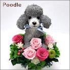 プードル犬のトピアリー