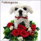ペキニーズ犬のプリザーブドフラワーアレンジ ペキニーズグッズ