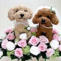 犬猫トピアリーフラワーギフトのアトリエ花倶楽部ではオリジナル作品をお届けしています。