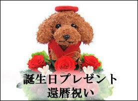 犬猫好きの人が喜ぶ誕生日プレゼント,還暦祝い,喜寿祝