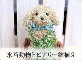 犬猫形 トピアリー鉢植え、アニマルフラワー