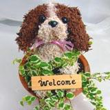 ペットのオーダーメイドトピアリー犬種別キャバリア