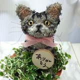 トピアリー猫
