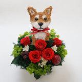 柴犬のプリザーブドフラワーアレンジPretty