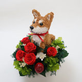 柴犬 お悔やみお供え花