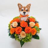 柴犬の プリザーブドフラワーアレンジBeauty