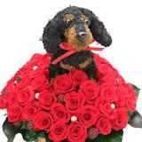 還暦祝いの赤いバラ60輪と愛犬の オーダーメイドトピアリー