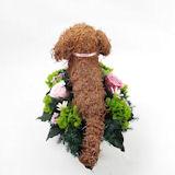 ダックス 犬のプリザーブドフラワーアレンジhappybirthday
