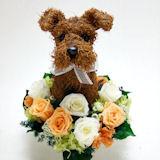 ウェルカムドール犬