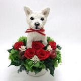 白柴犬の プリザーブドフラワーPretty