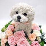 犬の形の花