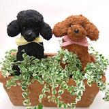 2匹の動物トピアリー寄せ植え
