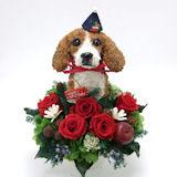 クリスマス限定 ビーグル犬の プリザーブドフラワー