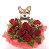 柴犬のトピアリー クリスマス限定 フラワーアレンジ(生花)