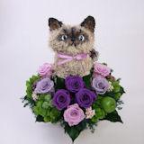 ペルシャ猫ヒマラヤンのトピアリー プリザーブドフラワー cute
