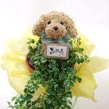 父の日のプレゼントにおすすめの犬の水苔トピアリー