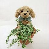 犬の水苔トピアリーチャイルドサイズ