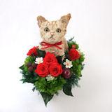 マンチカン猫のトピアリー プリザーブドフラワーPretty