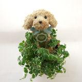 母の日限定 犬のトピアリー鉢植え ベビーサイズ
