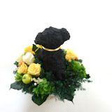 黒パグのトピアリープリザーブドフラワー