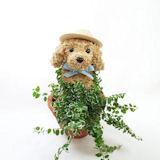 犬の水苔トピアリー 夏バージョン鉢植えチャイルドタイプ