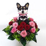 黒柴犬のトピアリー プリザーブドフラワーBeauty