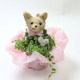 ホワイトデー限定 可愛い猫の水苔トピアリー