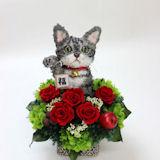 我が家の招き猫 アメリカンショートヘアP