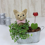 ホワイトデー限定 猫の水苔トピアリー寄せ植え