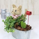 ホワイトデー限定 猫の水苔トピアリーハート寄せ植え
