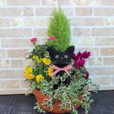 黒猫の水苔トピアリー寄せ植え