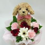 母の日、敬老の日限定ギフト・トピアリー フラワー(生花)アレンジ犬