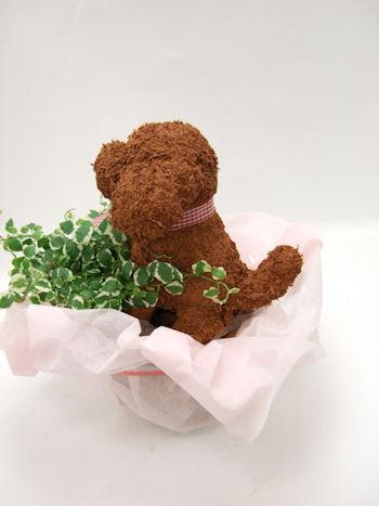 プードルのトピアリー鉢植え