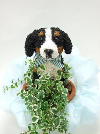 バーニーズマウンテンのトピアリー鉢植え