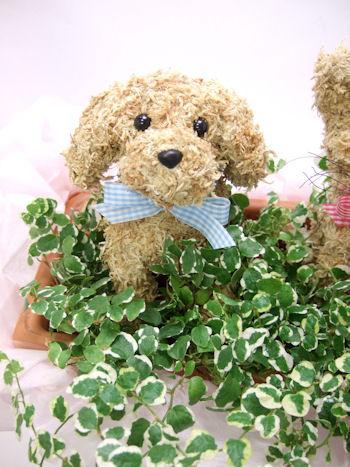 犬と猫の水苔トピアリーシンプルな寄せ植え