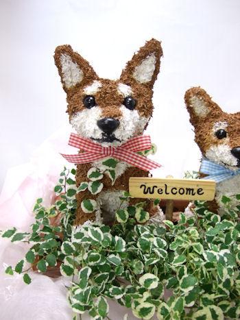 柴犬の水苔トピアリーを親子でシンプルに寄せ植え