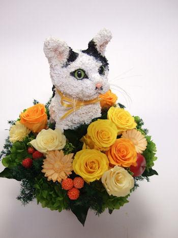 楽屋見舞いのお花 猫
