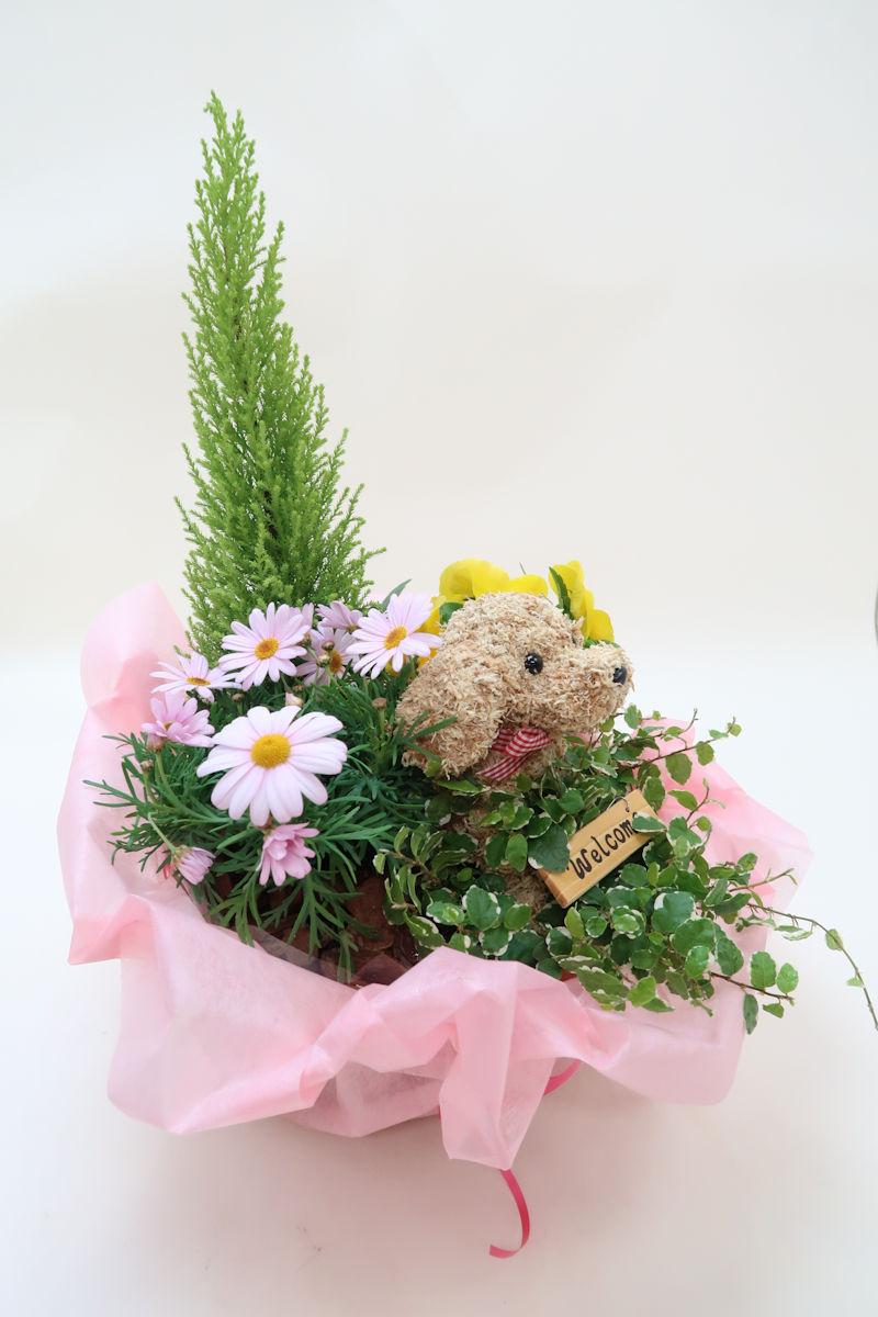 開店祝い_inu.JPG