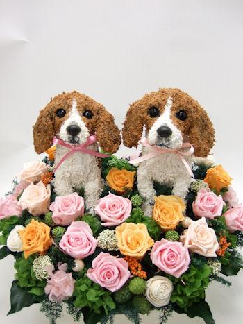 結婚式ウェルカムドッグ