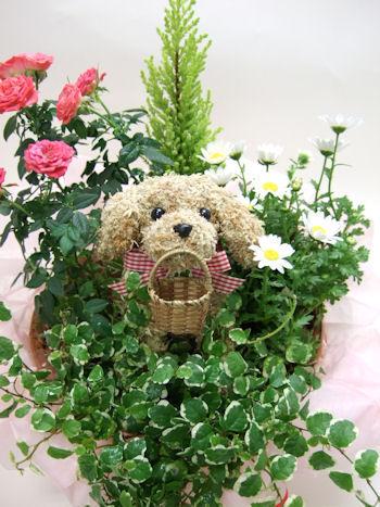 犬の水苔トピアリー寄せ植え