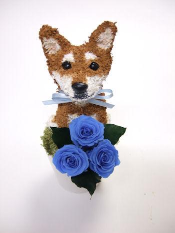柴犬のウェルカムドール